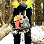 خدمات درختکاری در تورنتو